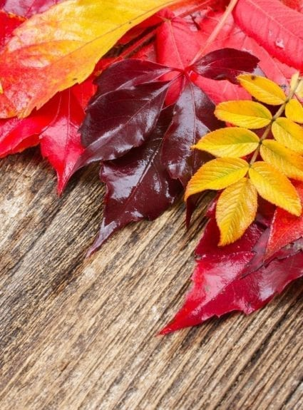 8 indoor fall activities for your toddler!